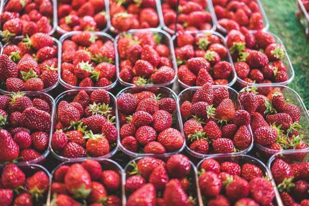 Comment conserver des fraises