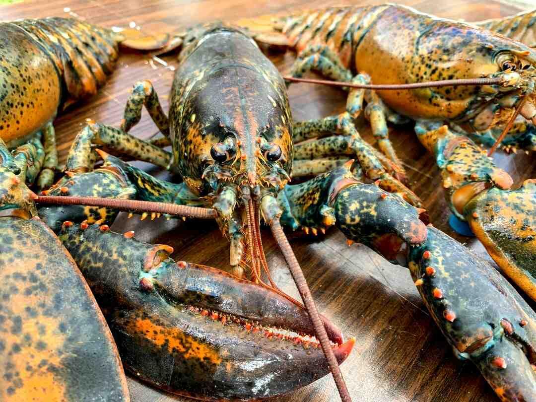 Comment manger du homard