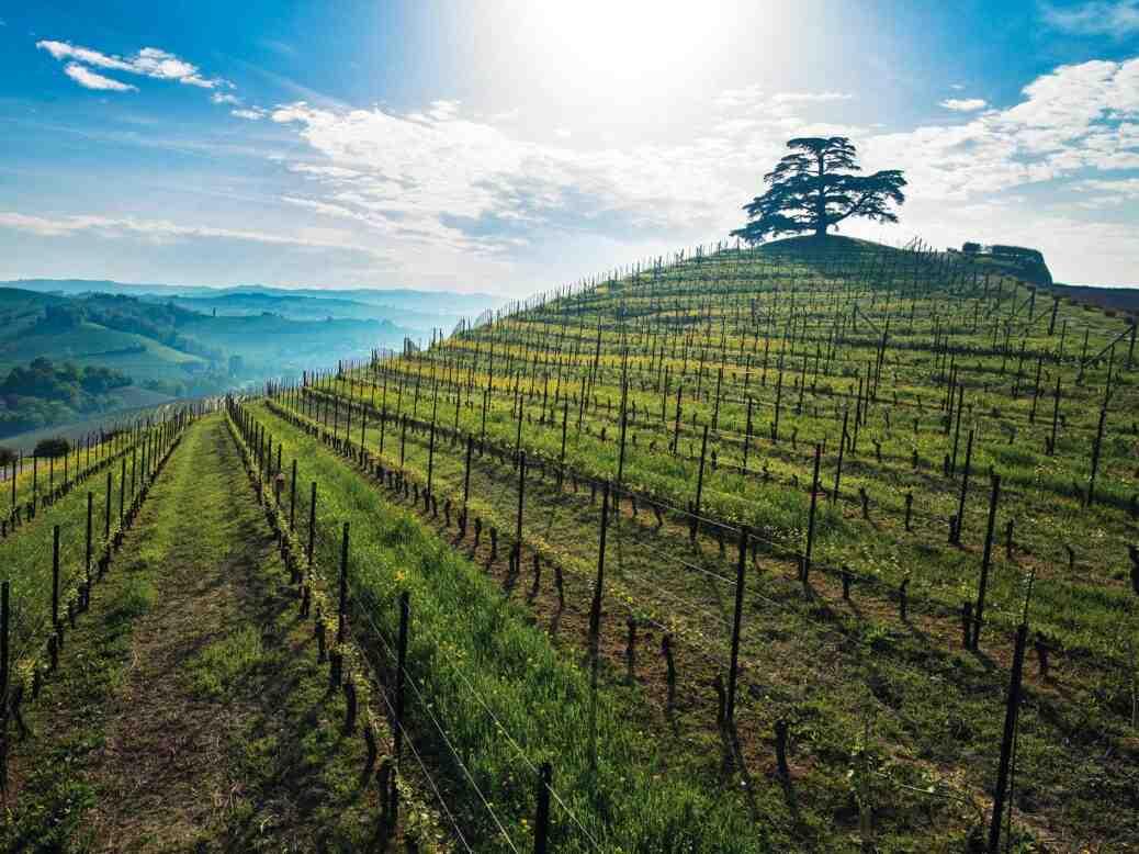 Quand acheter les vins primeurs ?